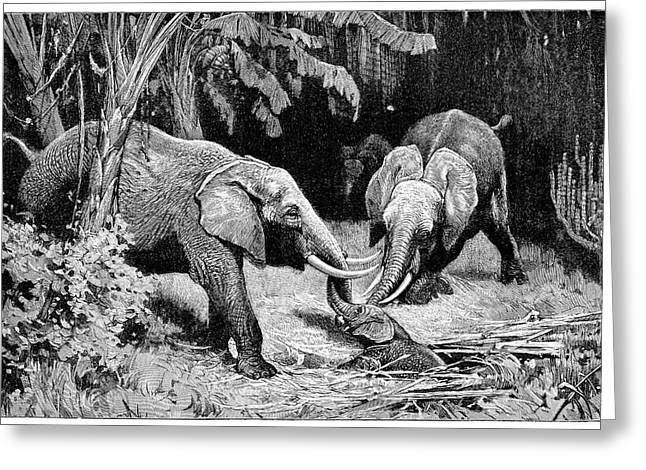 Rescue By African Elephants Greeting Card