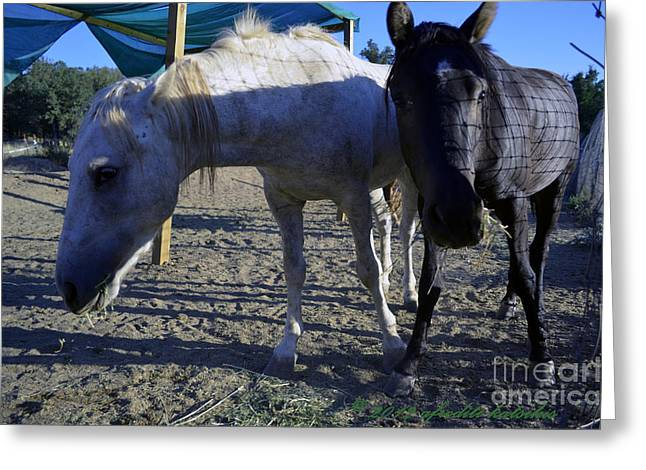 Rescued Mustangs Greeting Card