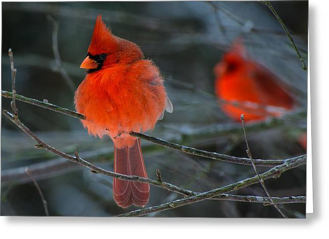 Resident Reds Greeting Card