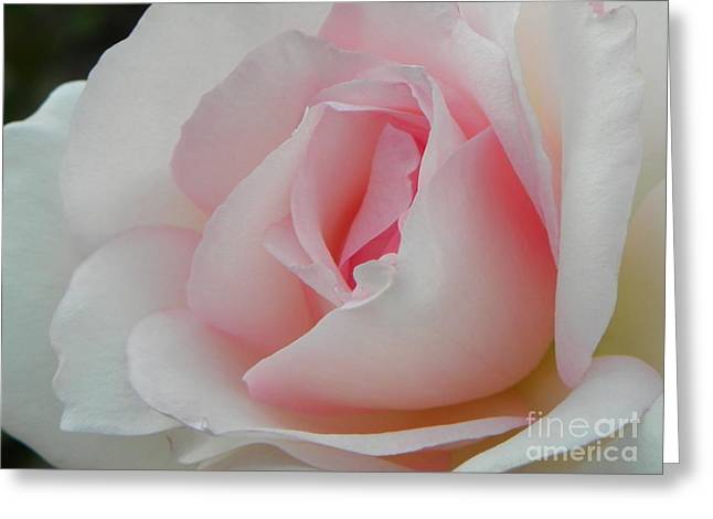 Greeting Card featuring the photograph Resplendent by Deb Halloran