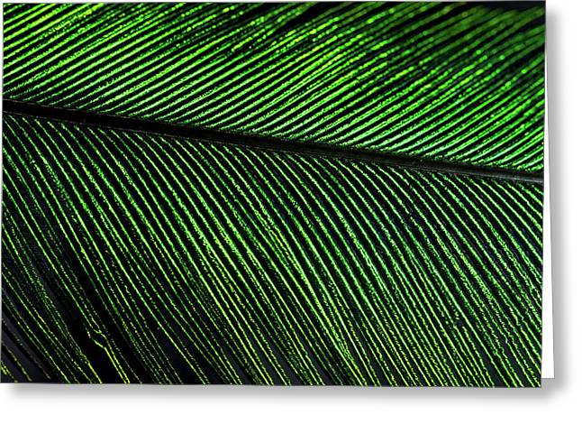 Resplendent Quetzal Feather Detail Greeting Card by Andres Morya Hinojosa