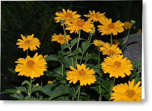 Resplendent Yellows Greeting Card by Sonali Gangane