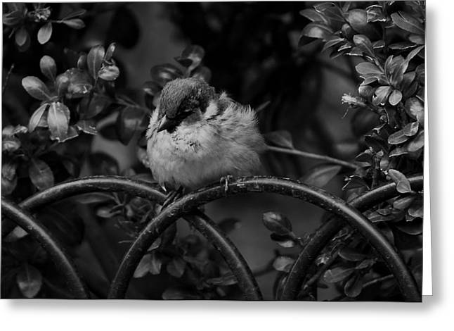 Rest For The Weary Greeting Card by Paul Watkins