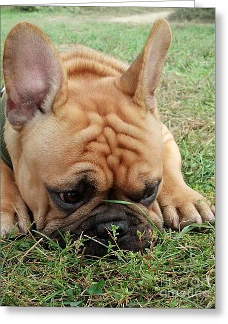Rest- French Bulldog Greeting Card