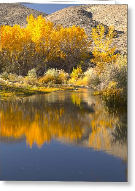 Restful Waters Greeting Card by Jim Snyder