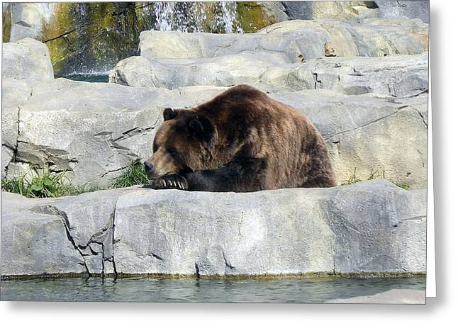Greeting Card featuring the photograph Resting Bear by Teresa Schomig