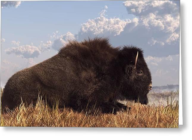 Resting Bison Greeting Card by Daniel Eskridge