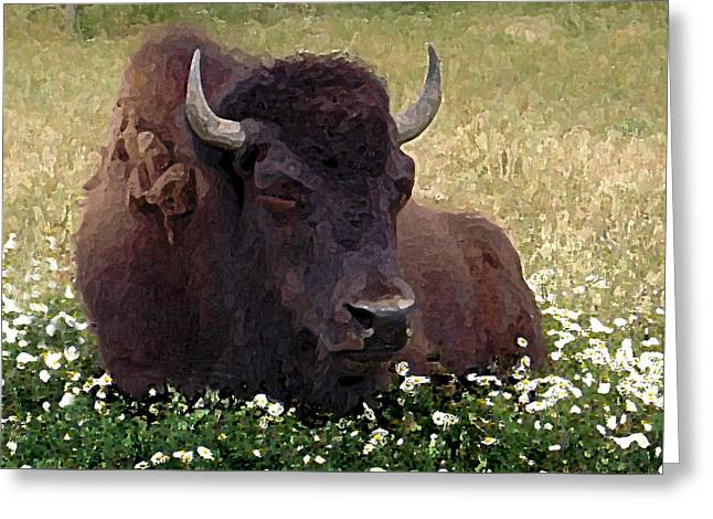 Resting Bison Greeting Card by Michele Avanti