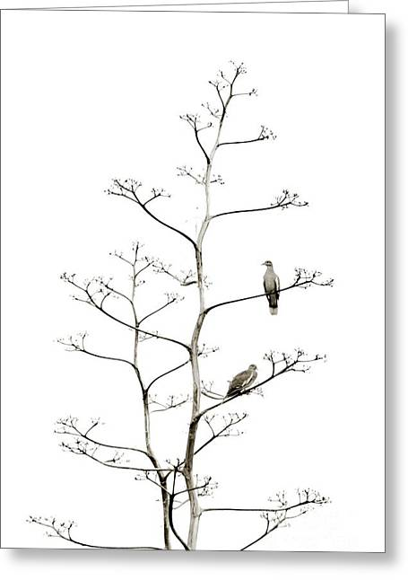 Resting Doves Greeting Card