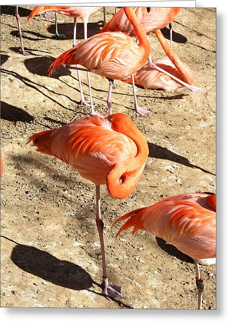 Resting Flamingo Greeting Card