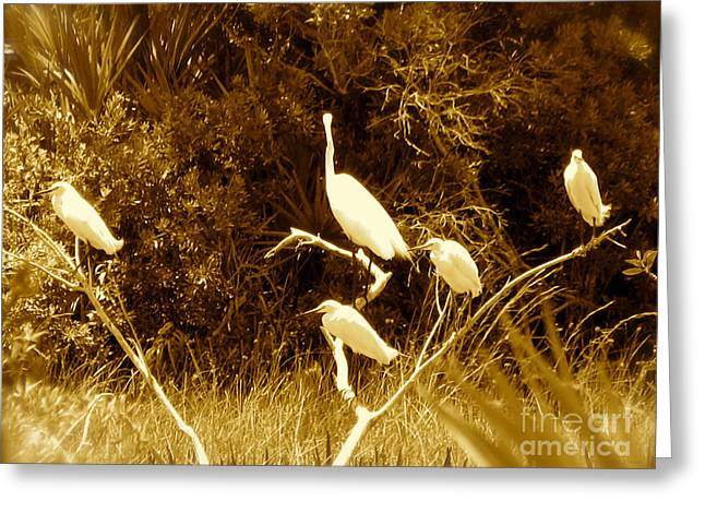 Resting Flock Sepia Greeting Card by Anita Lewis