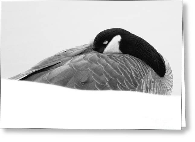 Greeting Card featuring the photograph Resting Goose In Bw by Anita Oakley