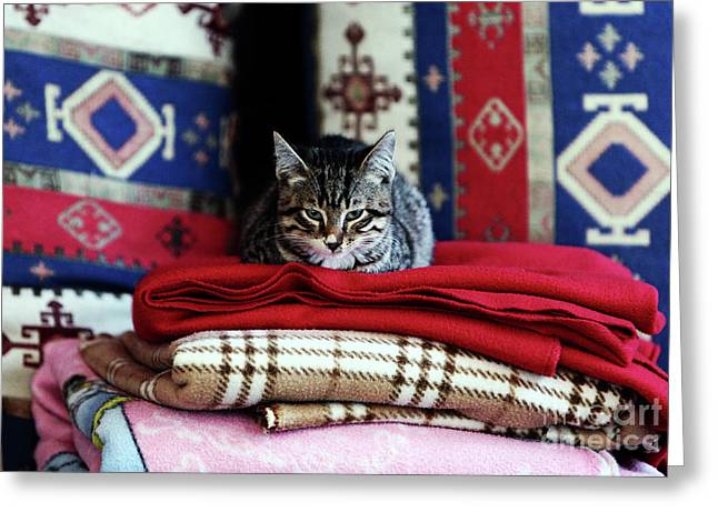 Resting In Istanbul Greeting Card by John Rizzuto