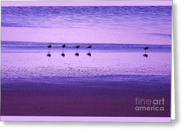Avocets Resting In The Sunset Greeting Card