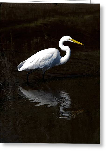Greeting Card featuring the photograph Resting Reflection by Paula Porterfield-Izzo