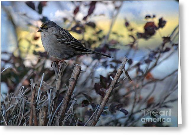Greeting Card featuring the photograph Resting Sparrow by Marjorie Imbeau