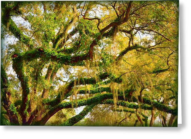 Resurrection Fern Greeting Card by Carla Parris