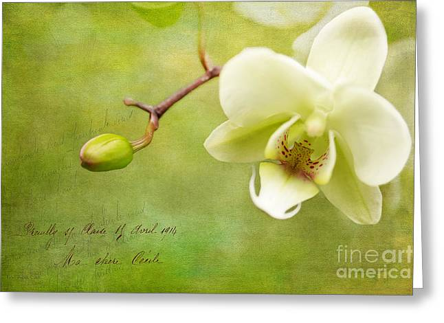 Reticent Greeting Card