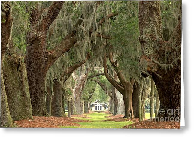 Retreat Avenue Of The Oaks Greeting Card by Adam Jewell