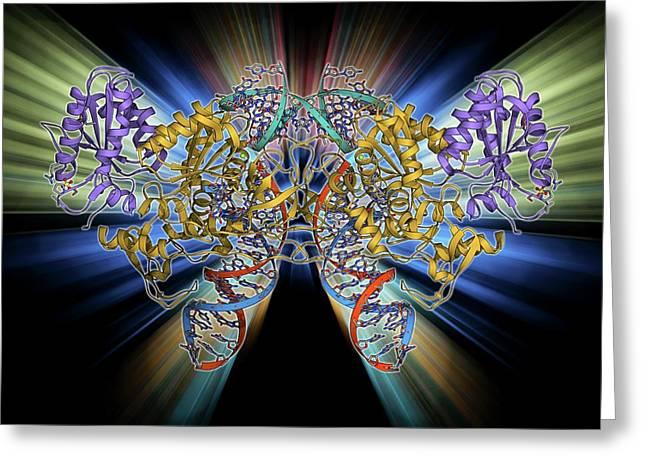 Retroviral Intasome Molecule Greeting Card by Laguna Design