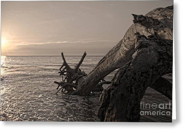 Greeting Card featuring the photograph Returning To The Sea by Glenda Wright