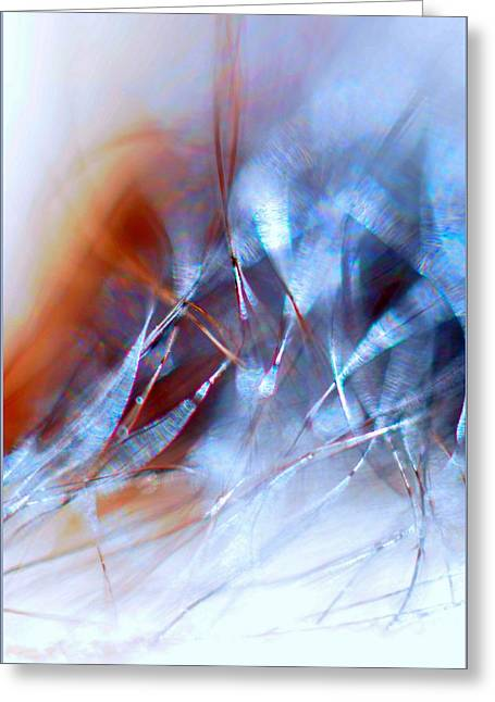 Rhapsody Of Art Greeting Card by JCYoung MacroXscape