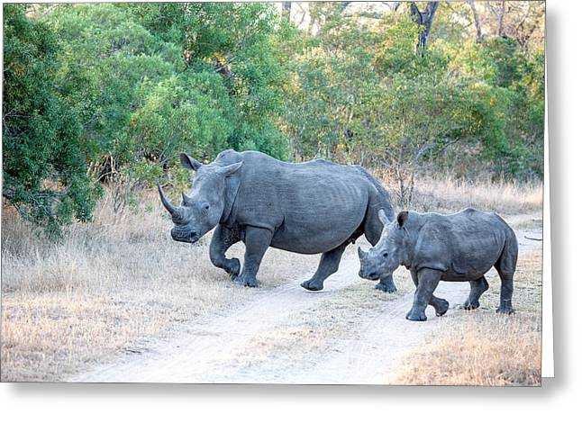 Rhino And Mom Greeting Card by Craig Brown