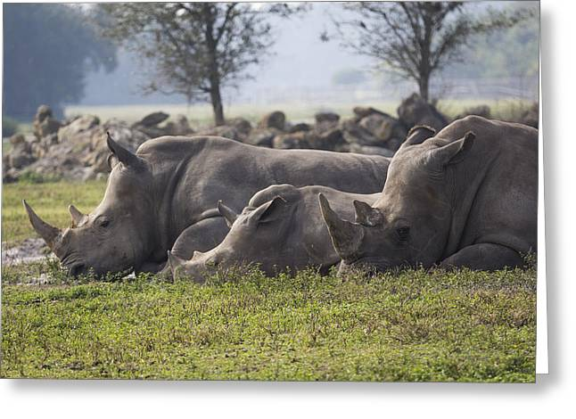 Rhino Family Greeting Card by Austin Whisnant