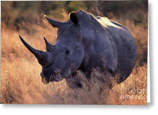 Greeting Card featuring the photograph Rhino by Michael Edwards