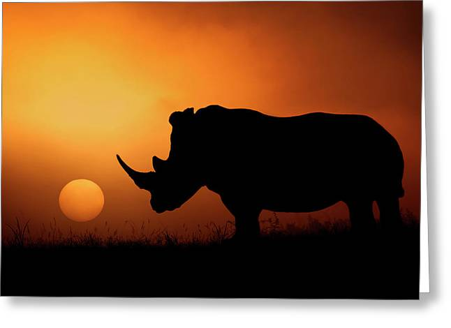 Rhino Sunrise Greeting Card by Mario Moreno