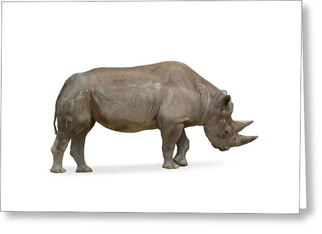 Greeting Card featuring the photograph Rhinoceros by Charles Beeler