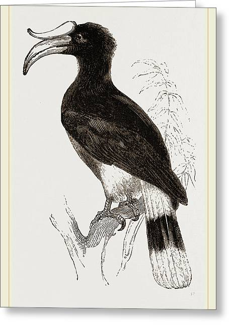 Rhinoceros Hornbill Greeting Card by Litz Collection