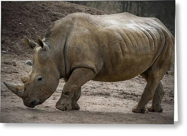Rhinoceros Greeting Card by Svetlana Sewell