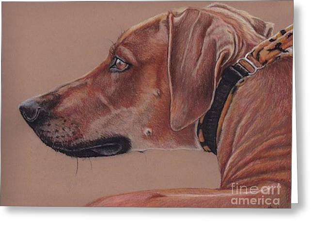 Rhodesian Ridgeback Greeting Card by Charlotte Yealey