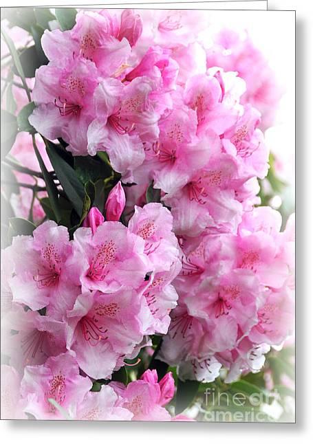 Rhodie Blossom Cascade Greeting Card