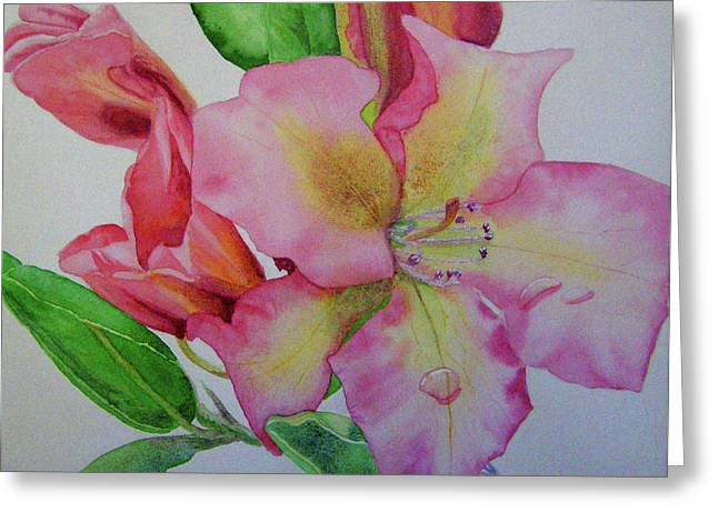 Rhodie With Dew I Greeting Card