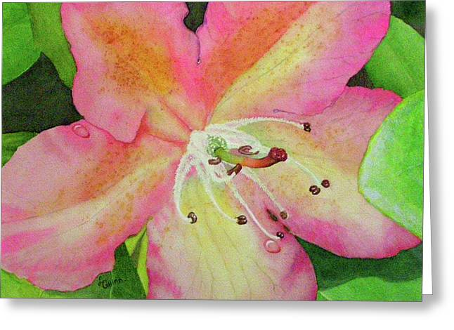 Rhodie With Dew II Greeting Card