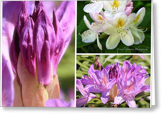 Rhododendron Collage Greeting Card by Carol Groenen