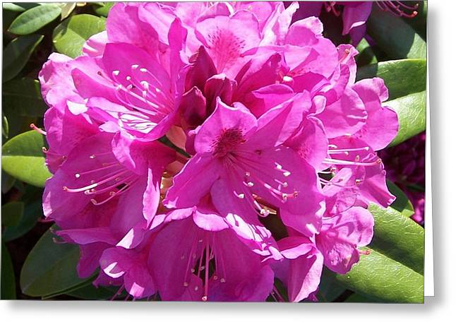 Rhododendron Circle Greeting Card