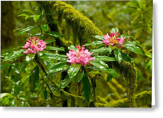 Rhododendron Flowers In A Forest Greeting Card by Panoramic Images