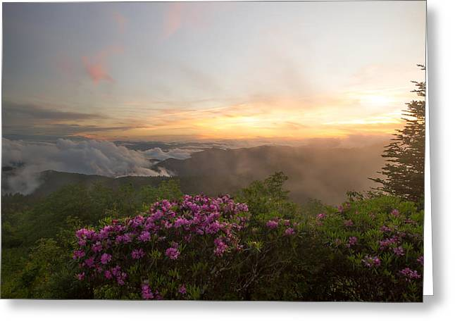 Rhododendron Sunset Greeting Card