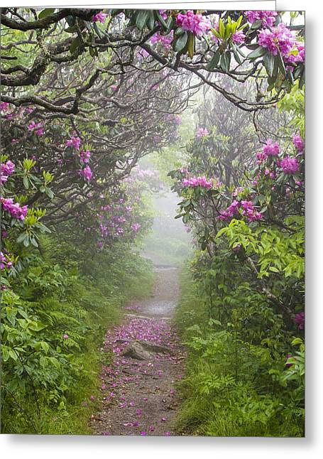Rhododendron Time In North Carolina Greeting Card by Bill Swindaman