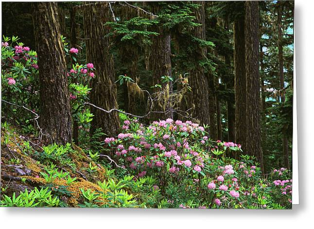 Rhododendrons And Trees, Washington Greeting Card