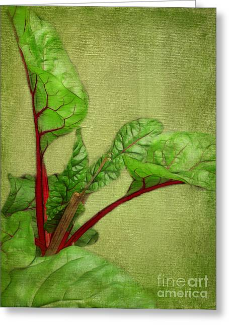 Rhubarb Greeting Card