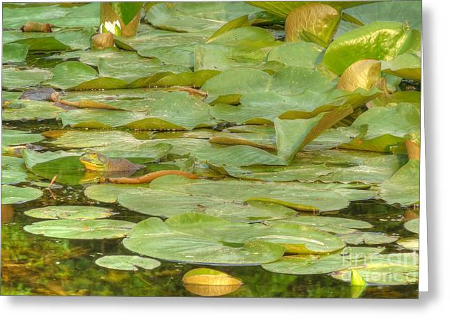 Ribbit Camouflage Greeting Card by Deborah Smolinske