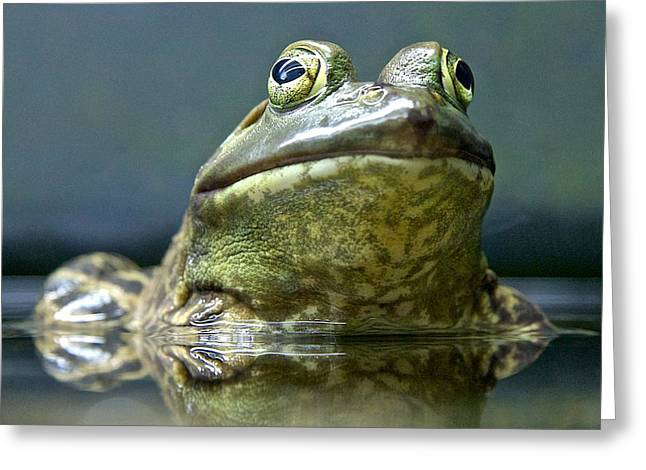 Greeting Card featuring the photograph Ribbit  by Scott Holmes