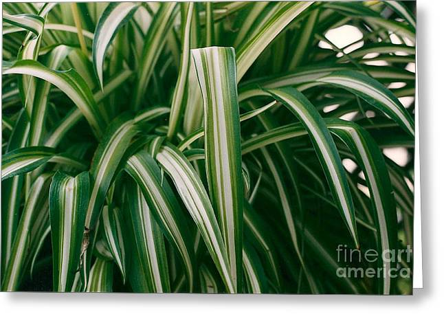 Ribbon Grass Greeting Card
