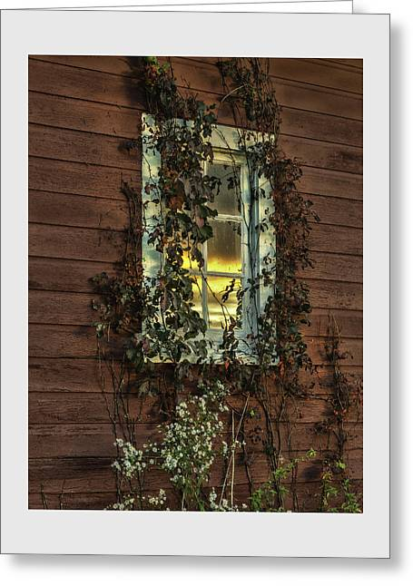 Ribbons Of Vines And Inspiring Sunset Reflections Greeting Card by Thomas Schoeller
