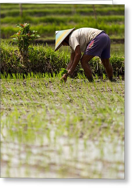 Greeting Card featuring the photograph Rice Farmer - Bali by Matthew Onheiber