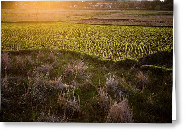 Rice Field In Madagascar Greeting Card